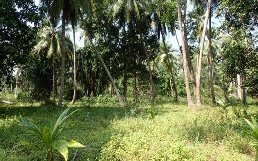 Land #2 - Koh Phangan, easy access 4.45 rai @ 8.25m baht