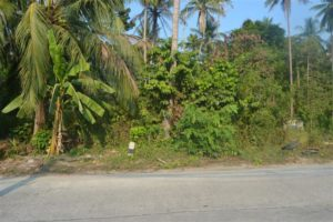 2+ rai for sale, main road Koh Phangan #2