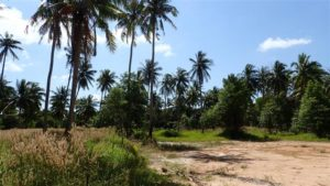 Wok Tum, Koh Phangan land plots for sale #2
