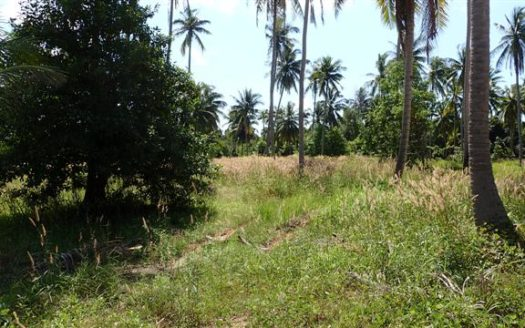 Wok Tum, Koh Phangan bargain small land plots for sale