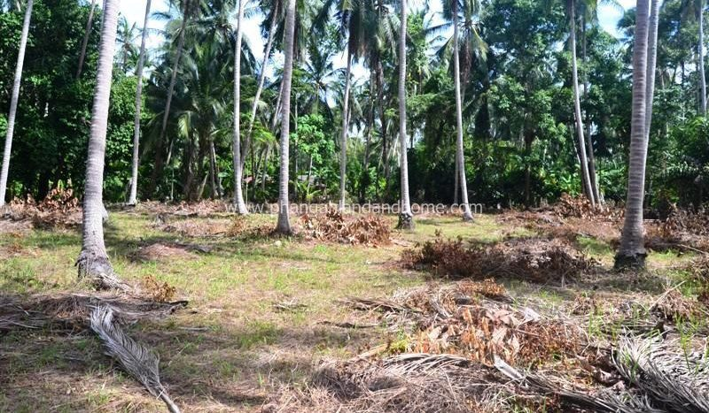 Bargain priced Koh Phangan investment land for sale #2
