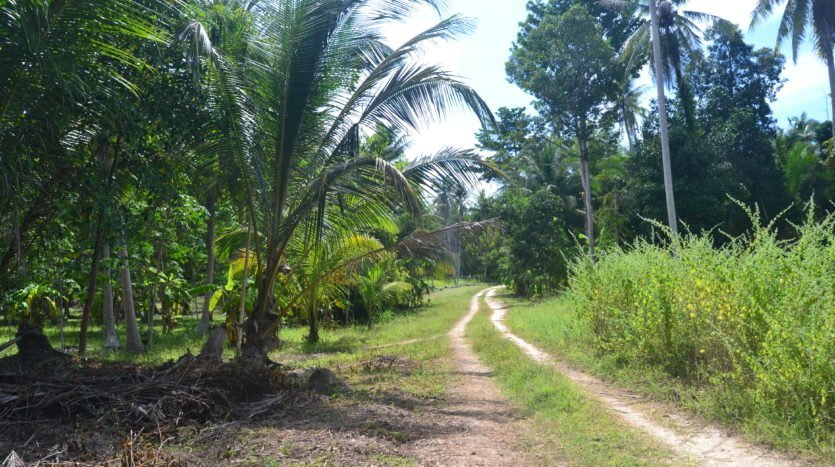 Bargain priced Koh Phangan investment land for sale access