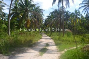 Peaceful and central Koh Phangan cheap meadow land for sale