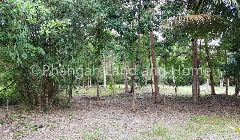 Quiet, central, natural well priced Koh Phangan land for sale
