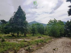 Cheap central Koh Phangan land for sale