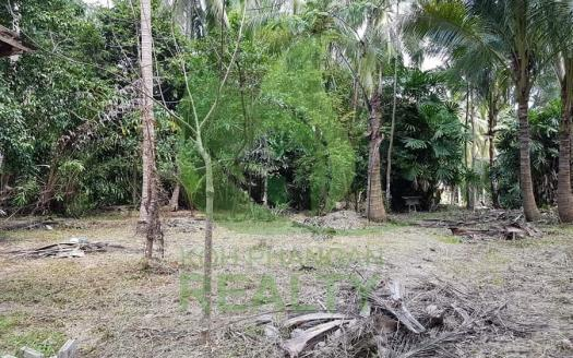 Best price Koh Phangan garden land plots for sale