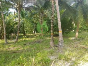 Lovely peaceful Sri Thanu Koh Phangan plot of land for sale
