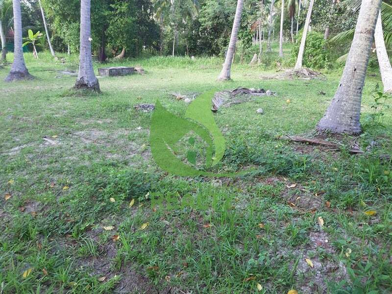 Koh Phangan land for sale in Coconut Lane area (3)