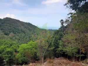 Bargain Wantakien Koh Phangan sea-view land for sale