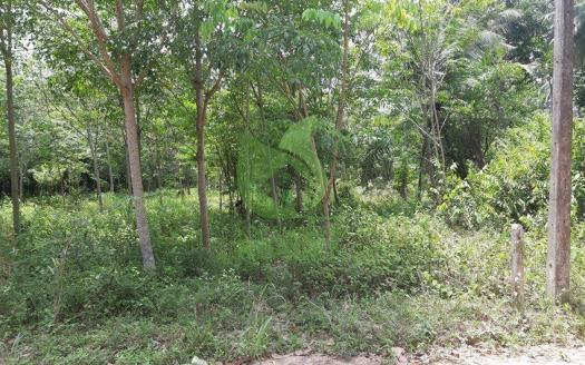 Ban Nai Suwan Ko Phangan flat easy to develop land for sale (1)