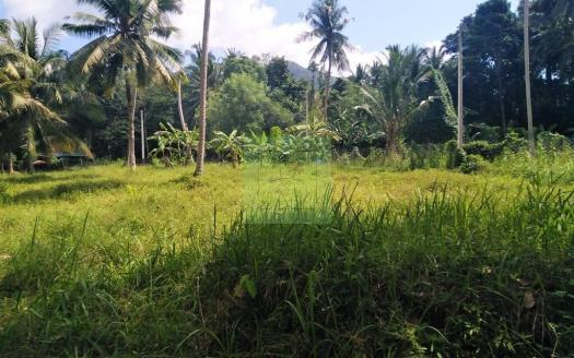 Bargain flat coconut land for sale Koh Phangan (2)