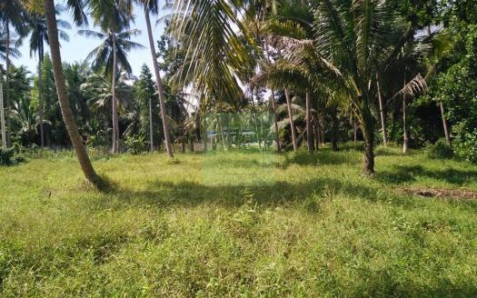 Bargain flat coconut land for sale Koh Phangan (3)