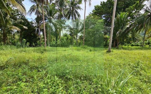 Best Phangan land deal - flat, peaceful, central land (4)